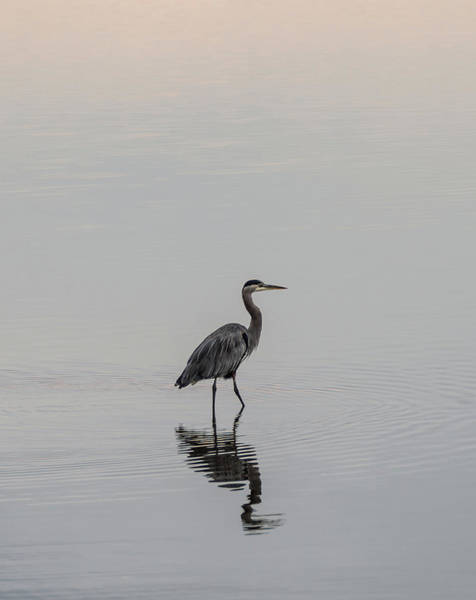 Photograph - In The Morning Light by Marilyn Wilson