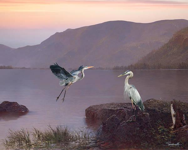 Great Lakes Digital Art - Herons At Lake George by M Spadecaller
