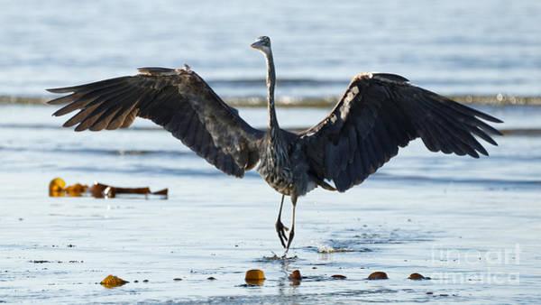 Photograph - Herons Beach Four by Sue Harper