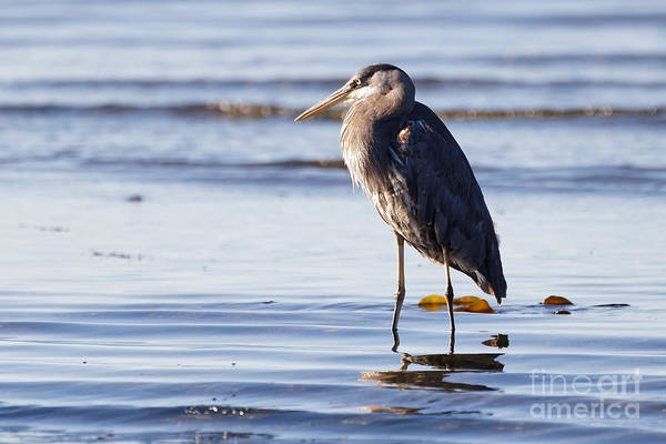Photograph - Herons Beach Two by Sue Harper