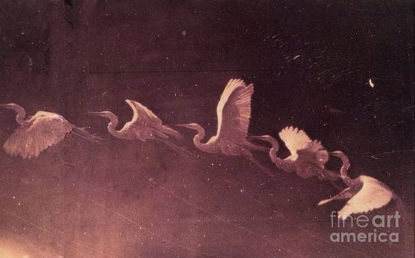Painting - Herons by Celestial Images