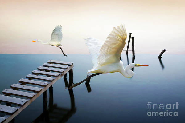 Great Egret Photograph - Herons On Patrol by Laura D Young