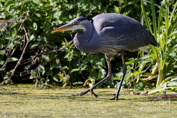 Photograph - Herons Pond by Sue Harper