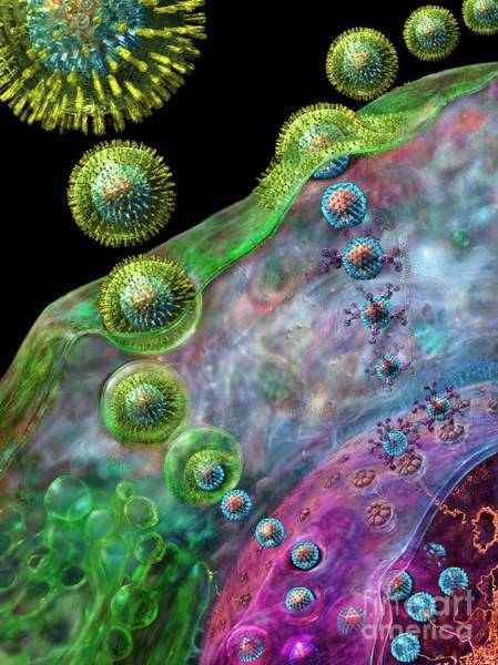 Digital Art - Herpes Virus Replication by Russell Kightley