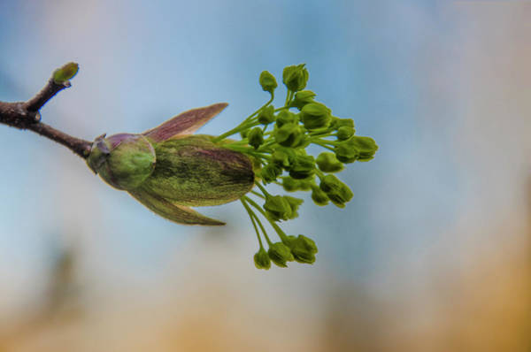 Photograph - Hey Bud by Bill Cannon