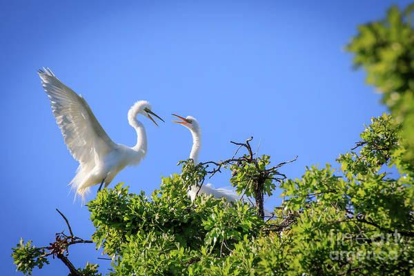 Photograph - Hey - Get Offa My Tree #2 by Richard Smith