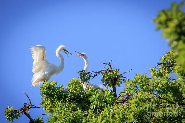 Photograph - Hey  Get Offa My Tree #3 by Richard Smith