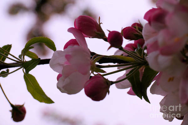 Wall Art - Photograph - A Tender Spring Promise by Jeff Swan