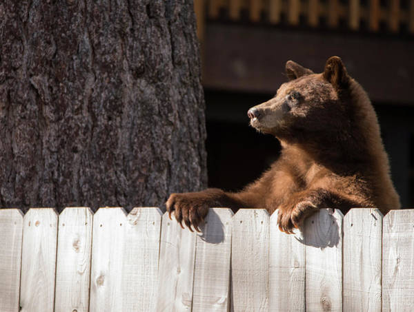 Photograph - Hey There Neighbor By Brad Scott by Brad Scott