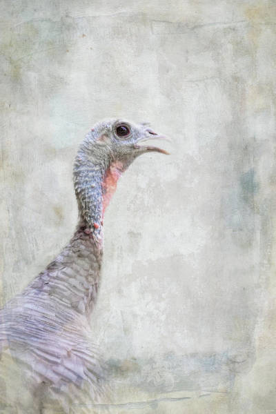Photograph - Hey Turkey by Jai Johnson