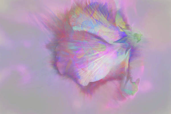 Photograph - Hibiscus Abstract by Kay Brewer