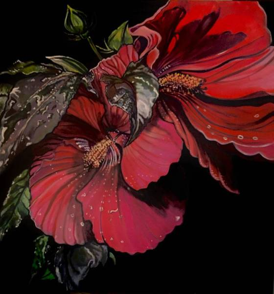 Hibiscus After The Rain Art Print