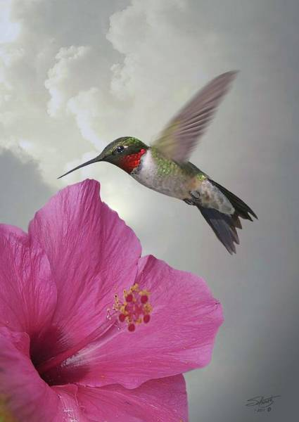 Wall Art - Digital Art - Hibiscus And Ruby-throated Hummingbird by M Spadecaller