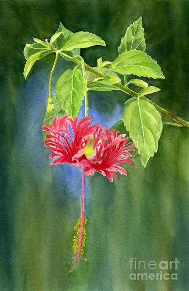 Hibiscus Painting - Hibiscus Chinese Red Lantern With Background by Sharon Freeman
