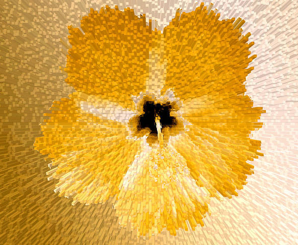 Photograph - Hibiscus Explosion by Laura Greco