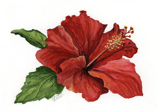 Painting - Hibiscus Flower by Darice Machel McGuire