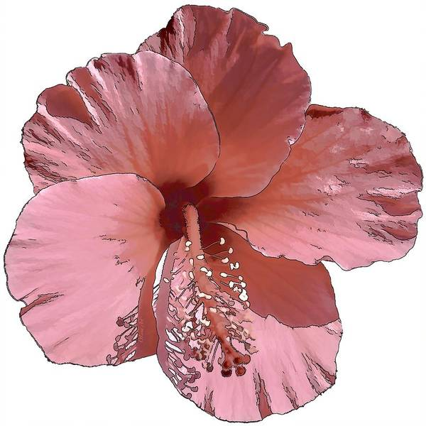 Digital Art - Hibiscus  Flower  by OLena Art - Lena Owens