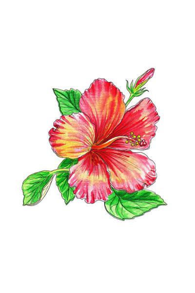 Hibiscus Flower Painting - Hibiscus Flower White Background by Irina Sztukowski