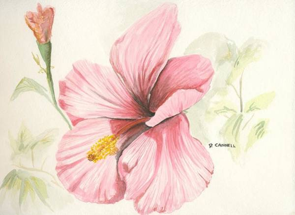 Painting - Hibiscus Hawaii  by Darren Cannell