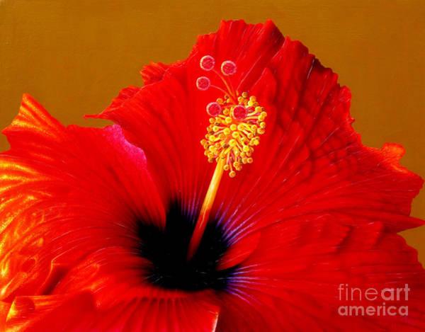 Hibiscus Flower Painting - Hibiscus by Jurek Zamoyski