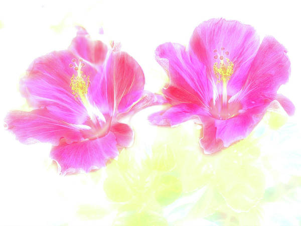 Photograph - Hibiscus Light by Kay Brewer