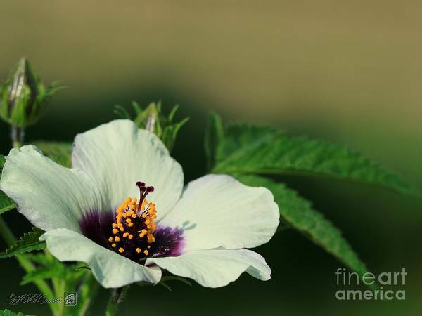 Wall Art - Photograph - Hibiscus Named Amethyst by J McCombie