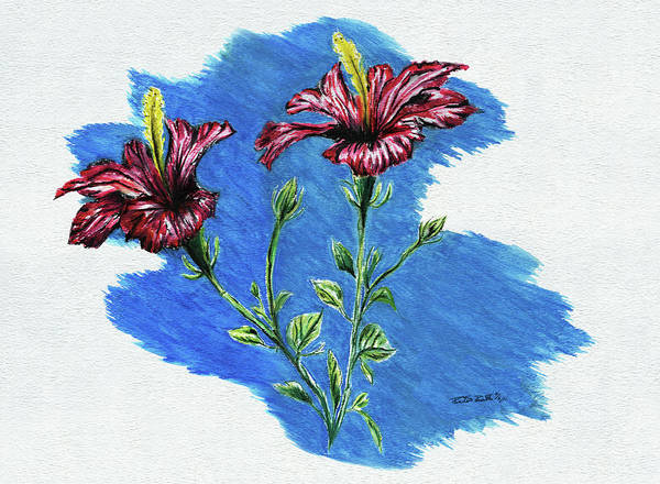 Hibiscus Flower Painting - Hibiscus by Peter Piatt