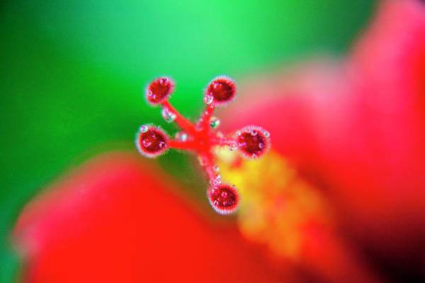 Hibiscus Probe Art Print