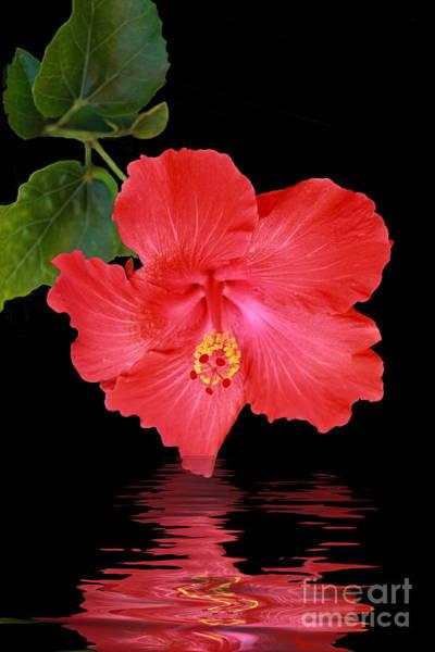 Photograph - Hibiscus Reflection by Elaine Teague