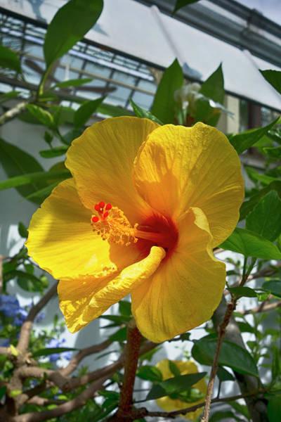 Photograph - Hibiscus Series Y6810 by Carlos Diaz