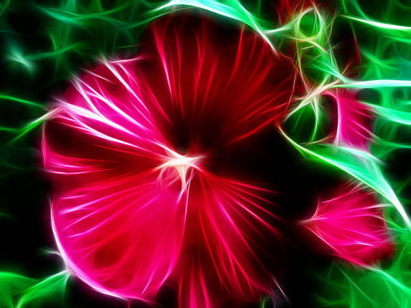 Mallow Family Wall Art - Photograph - Hibiscus Spell by Patricia Motley
