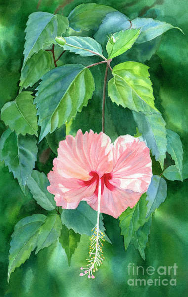 Wall Art - Painting - Hibiscus Sprinkle Rain With Leafy Background by Sharon Freeman