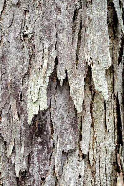 Photograph - Hickory Tree Bark Abstract by Christina Rollo