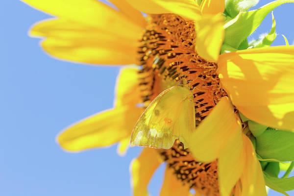 Photograph - Hidden Butterfly by SR Green