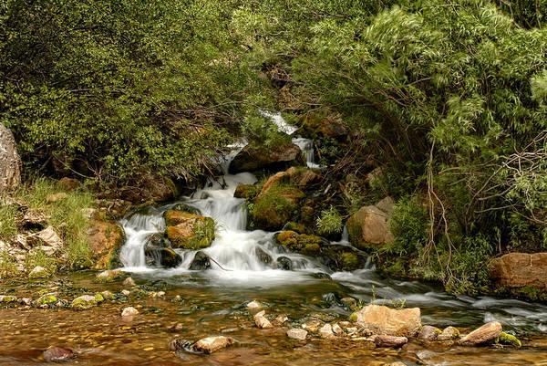 Photograph - Hidden Falls by Scott Read