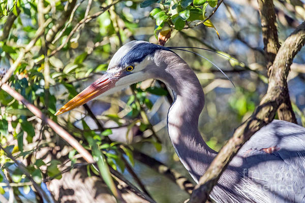 Photograph - Hidden Heron by Kate Brown