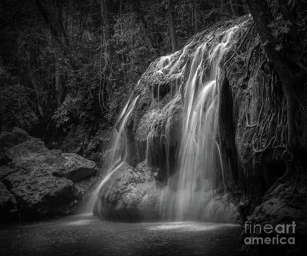 Photograph - Hidden In The Jungle Of Guatemala Bw by Jola Martysz