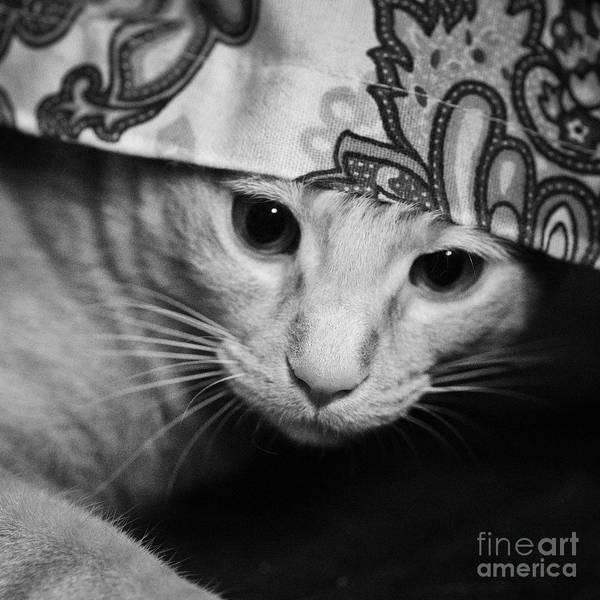 Photograph - Hidden Kitten by Patrick M Lynch