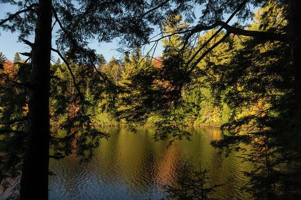 Photograph - Hidden Forest Lake by Georgia Mizuleva