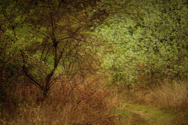 Photograph - Hidden Path by John Whitmarsh
