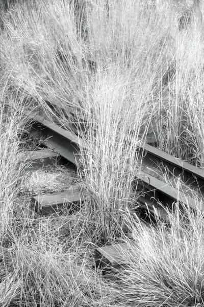 Photograph - Hidden Rails by Cate Franklyn