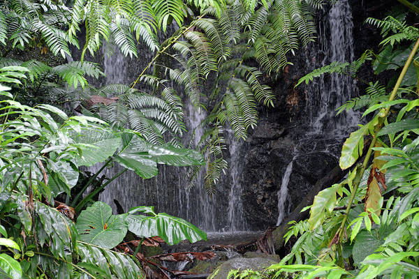 Photograph - Hidden Waterfall by Bruce Gourley