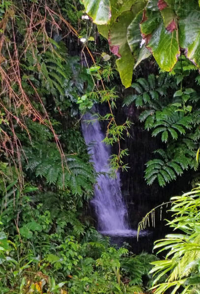 Photograph -  Small Hidden Waterfall  by Pamela Walton