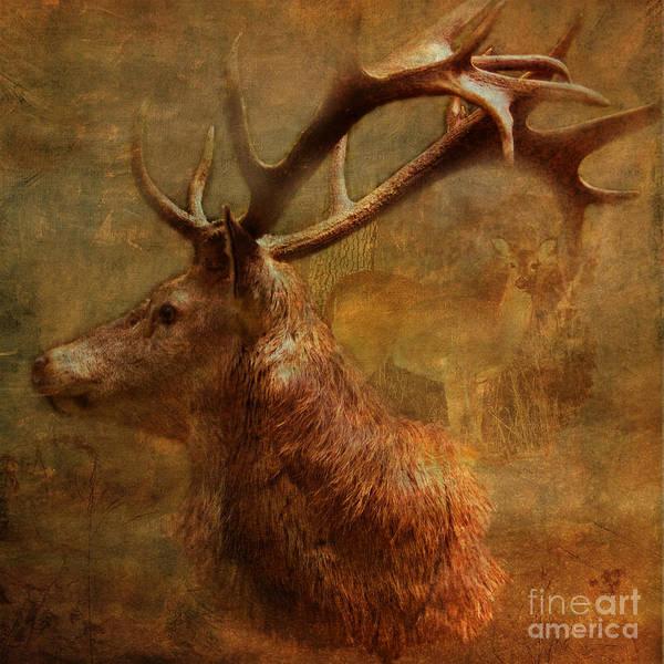 Digital Art - Hide And Seek 2015 by Kathryn Strick