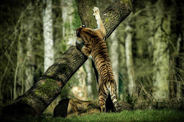 Photograph - Hide And Seek by Chris Boulton