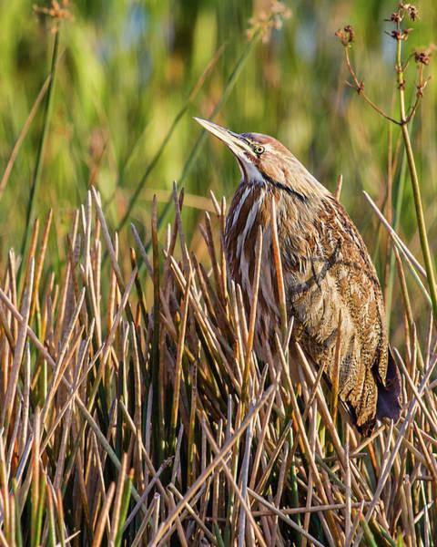 Photograph - Hiding In Plain Sight by Dawn Currie