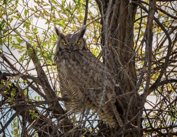 Photograph - Hiding In Plain Sight by Loree Johnson