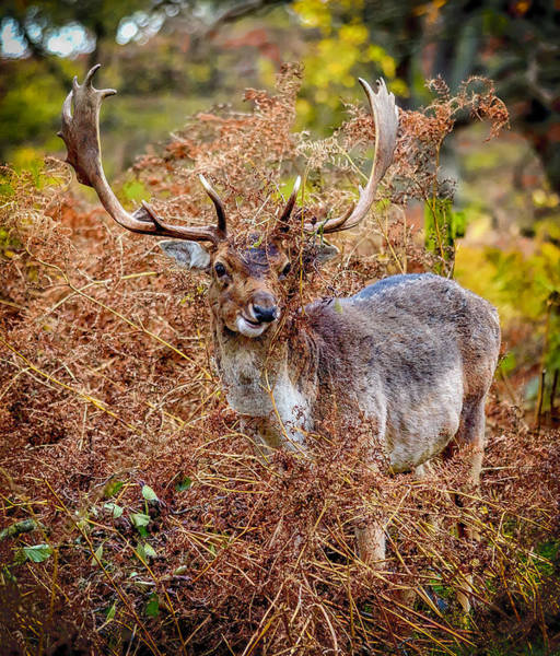 Photograph - Hiding In The Bracken by Nick Bywater