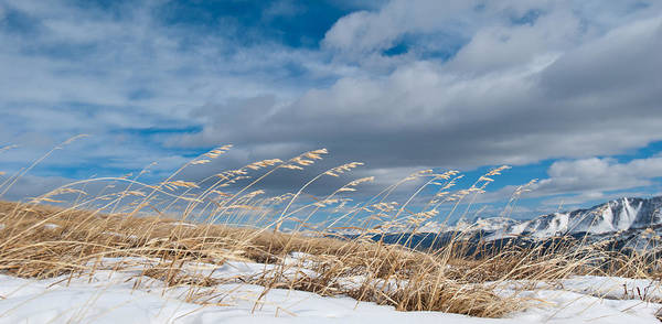 Photograph - High Altitude Winter Grass Panorama by Cascade Colors