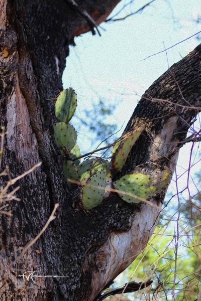 Wall Art - Photograph - High Cactus  by Felipe Gomez